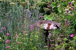habitat garden pic