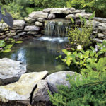 Pond Seminar - June 7th