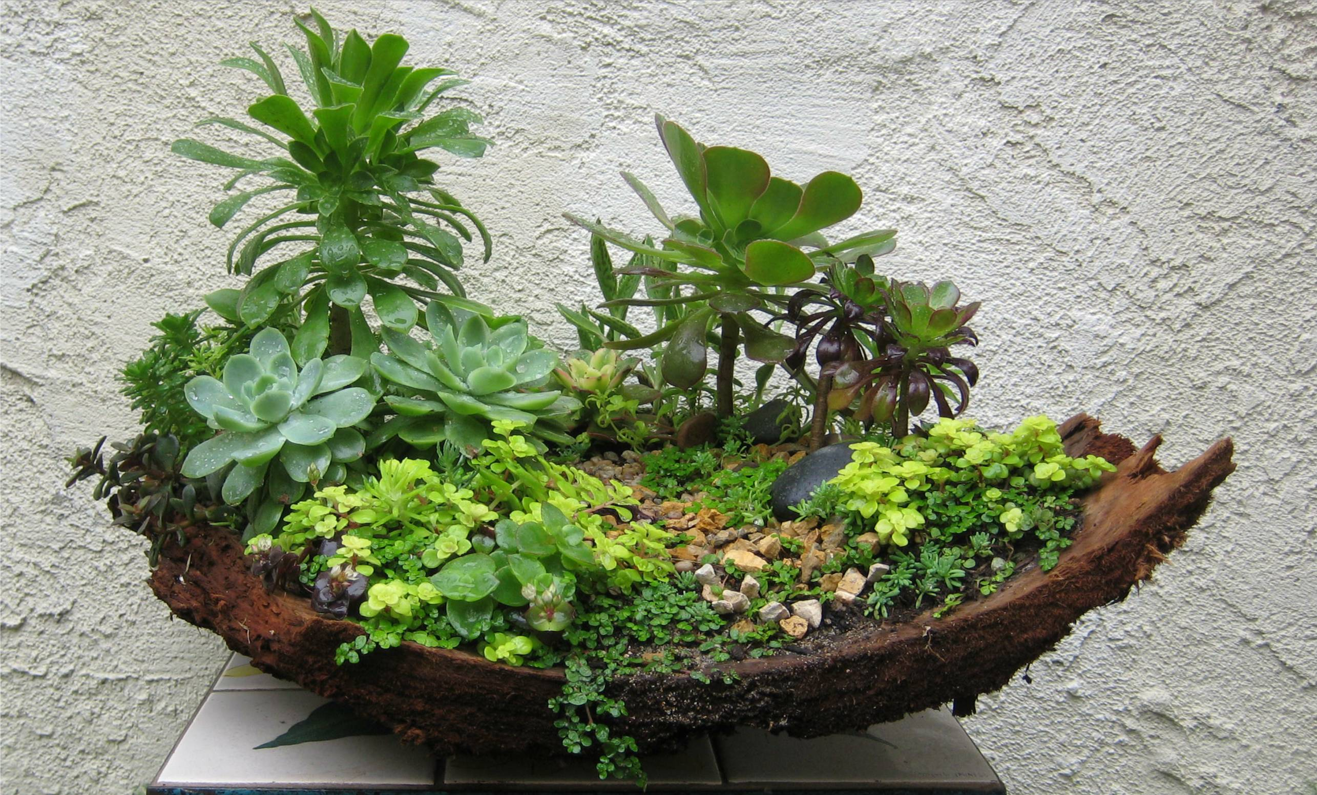 Workshop - Succulents & Miniature Gardens - May 22nd