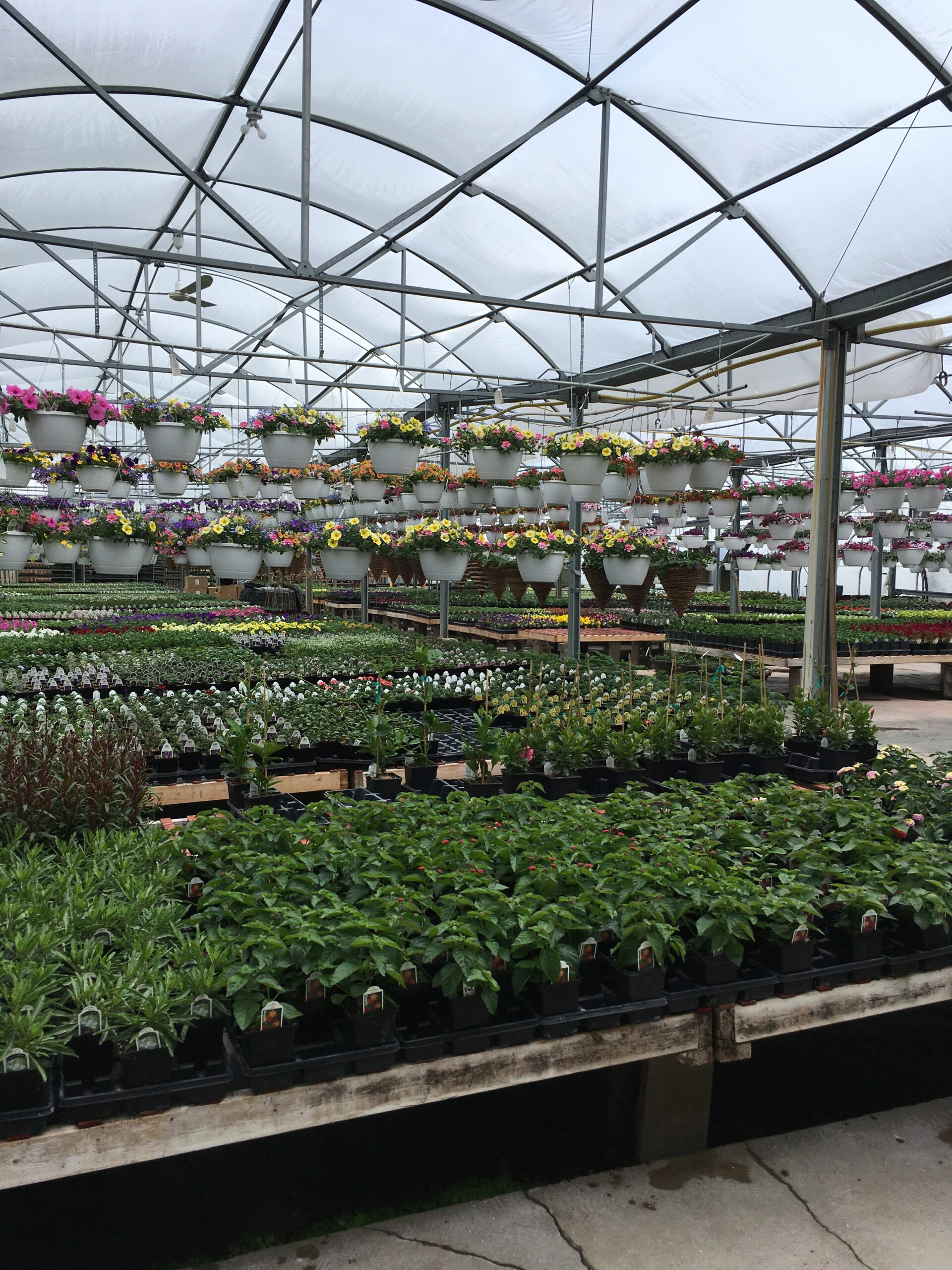 Greenhouses Fully Open on Monday, May 10th